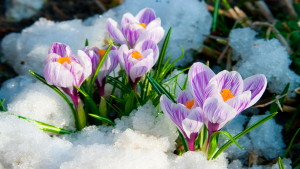 beautiful_nature_spring_flower_wallpaper_hd_24